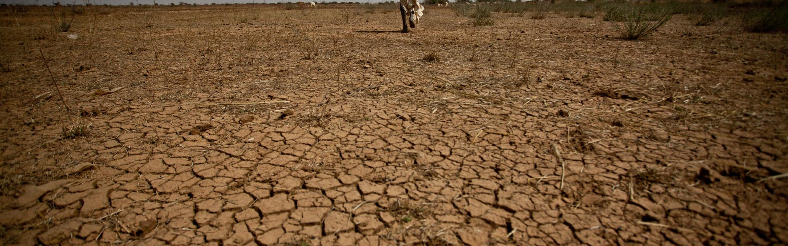 African farmer walking across parched land